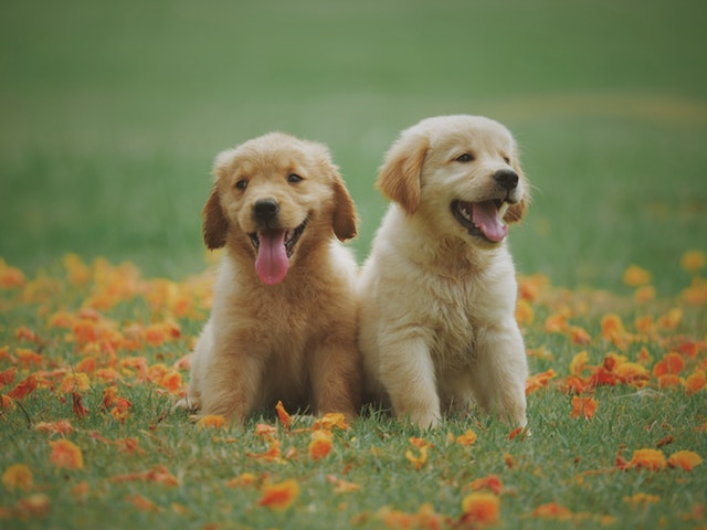 image of a two cute dogs